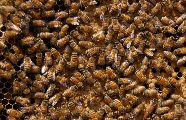 养蜂技术视频