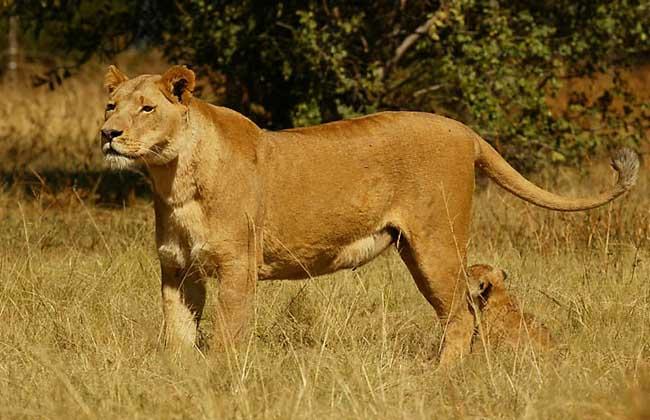 世界上活得最久的动物