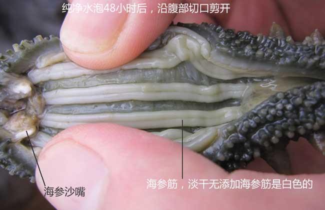 人造海参的危害和鉴别方法