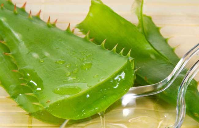芦荟面膜的功效与作用