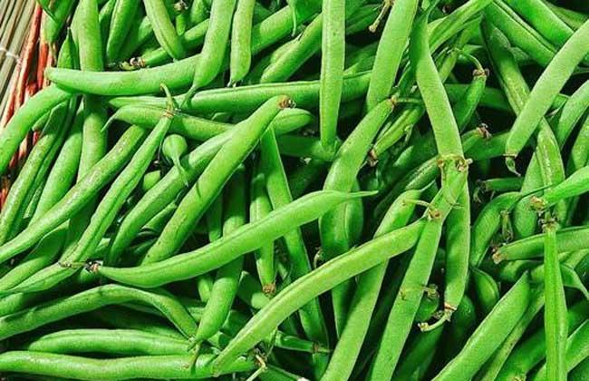 孕妇能吃四季豆吗