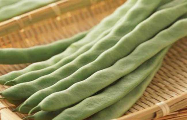 四季豆和豆角的区别