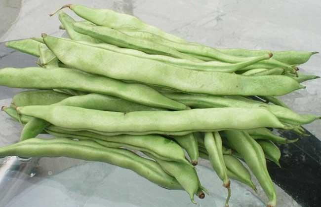 四季豆不能跟什么一起吃