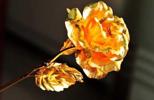 金玫瑰花语是什么?
