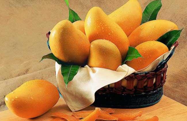 经期可以吃芒果吗?