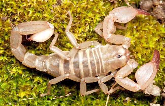 蝎子的养殖成本和养殖利润