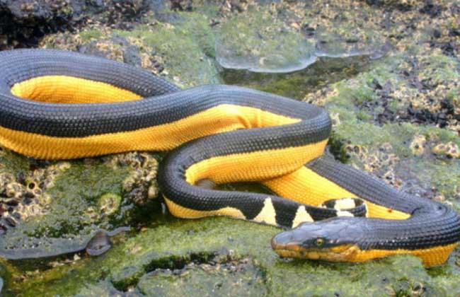 海蛇有毒吗