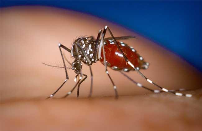 蚊子怎么过冬? 一般蚊子每年4月开始出现,至8月中下旬达到活动高峰。秋天气候变冷温度降到10以下时,蚊子就会停止繁殖,大量死亡,有极少的蚊子会存活,它们在墙缝等可以避风避寒的地方,比如躲藏在室内较温暖、且较隐蔽处,如衣柜背后等。但会躲开较热的地方,如暖气等。这样既可以躲过严冬,又可以降低新陈代谢速度,避免饥饿而死。有点儿像冬眠。 在室外,蚊子一般躲藏在暖气管道内等较温暖处,第二年出现的蚊子更多的是卵孵化出来的。