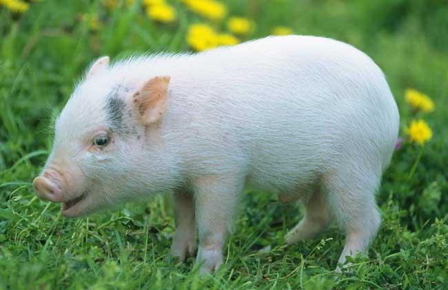世界上最聪明的动物排行榜