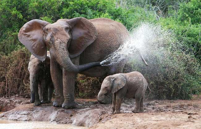 小孩学画画大象