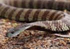 虎蛇的种类及图片