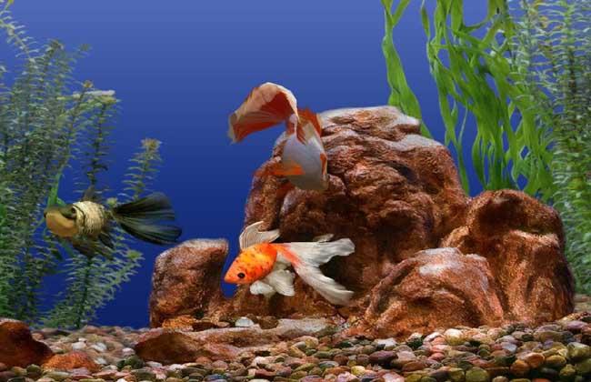 金鱼水族箱的造景方法