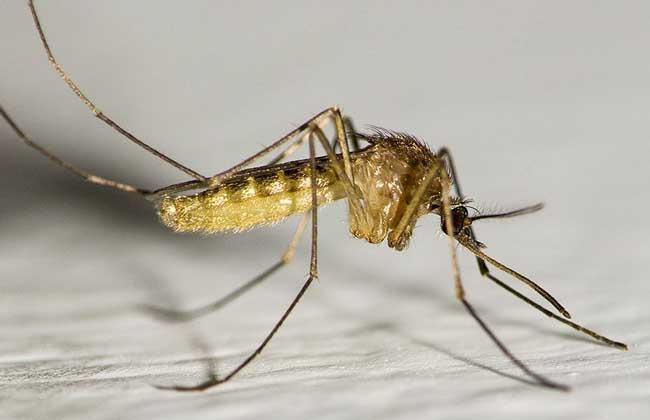 被蚊子咬了怎么办
