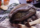 鲍鱼品种及图片大全