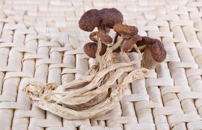 茶树菇的挑选方法