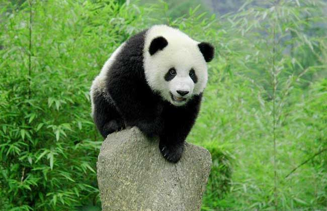 中国十大保护动物
