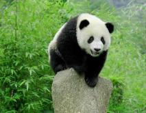 中国十大濒危灭绝的保护动物