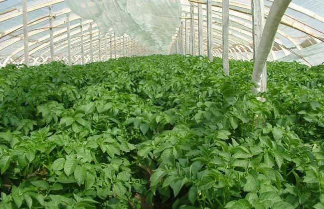 蔬菜大棚建设标准和成本