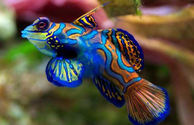 观赏鱼的作假方式