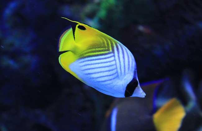观赏鱼吃什么食物?