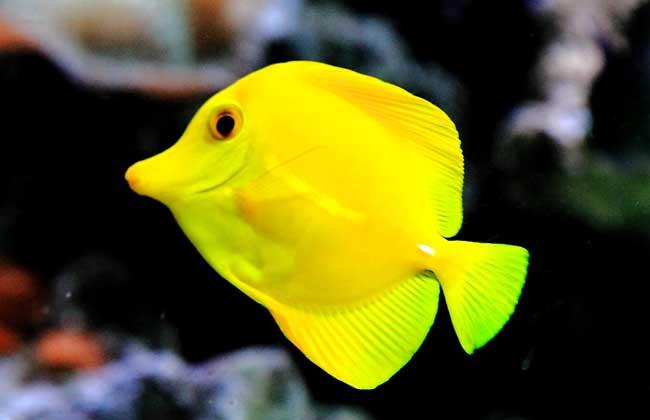 热带海水观赏鱼