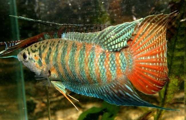 观赏鱼饲料种类有哪些?