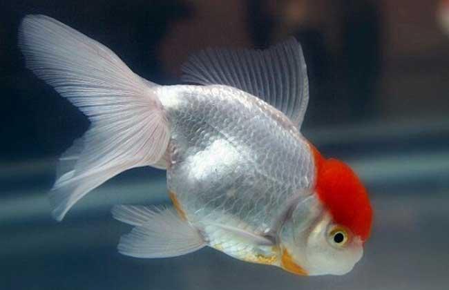 观赏鱼的养殖技术