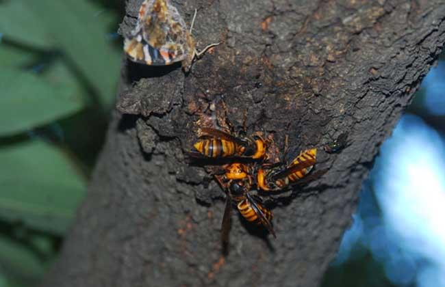 胡蜂蜇人怎么办