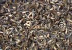 黄颡鱼养殖技术视频