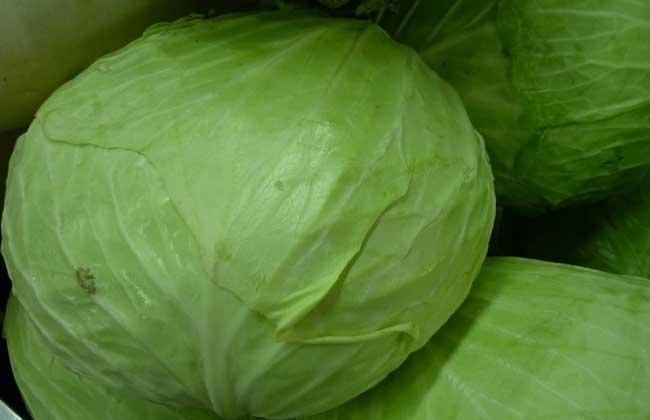 卷心菜能生吃吗