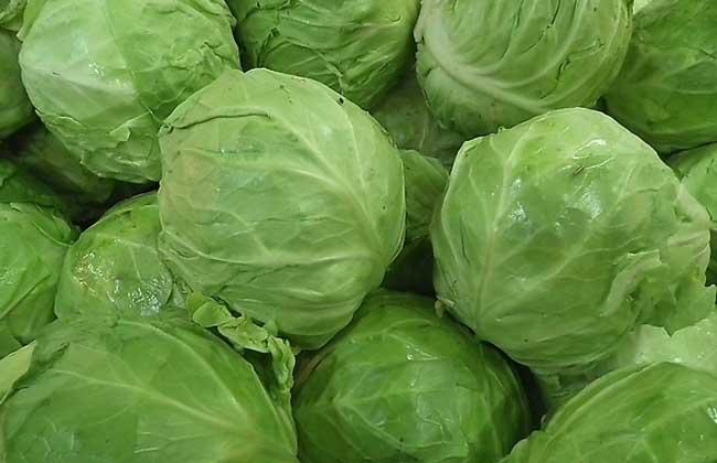 卷心菜能减肥吗
