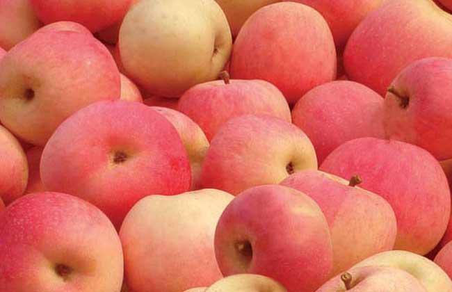 苹果的食用时间