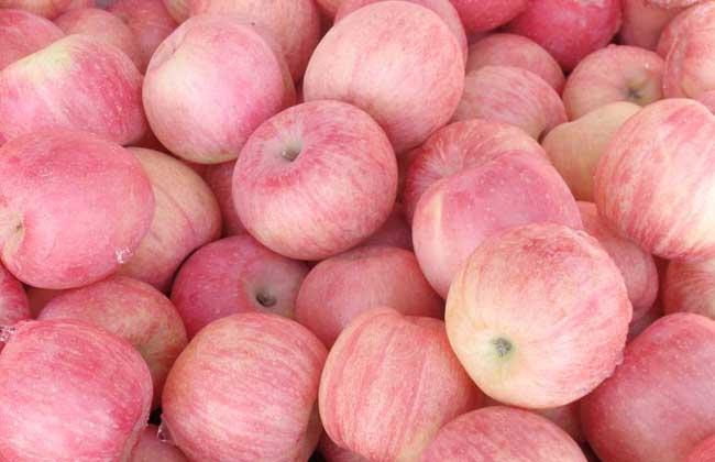 苹果种植技术