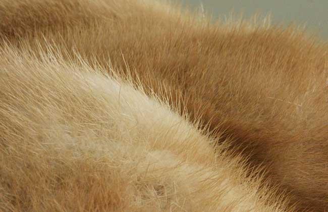 水貂皮的鉴别和保养方法