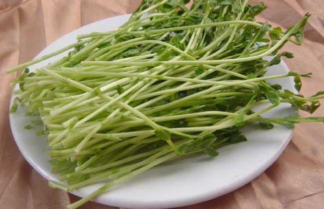 豌豆发芽能吃吗