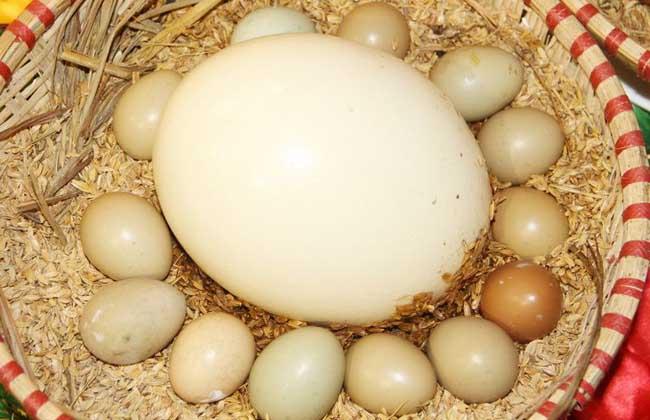 鸵鸟蛋怎么吃