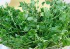 豌豆苗的营养价值