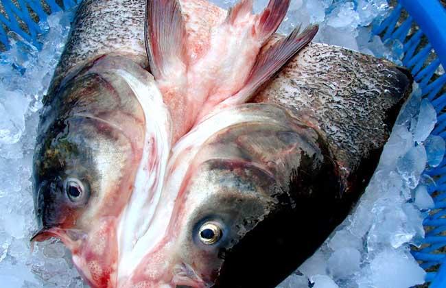 鲢鱼的营养价值