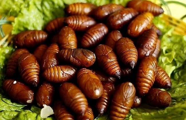 孕妇能吃蚕蛹吗?