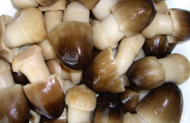 草菇的常见做法