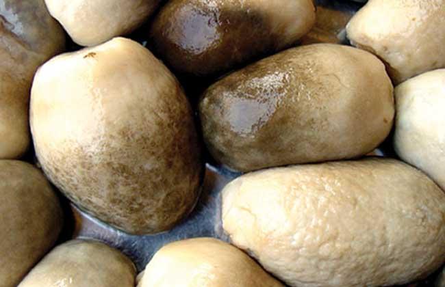 草菇多少钱一斤