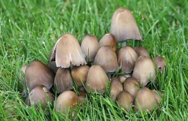 草菇能放冰箱保存吗