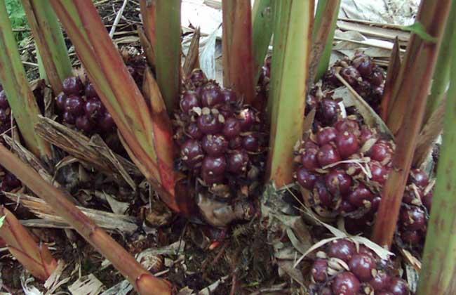 草果栽培技术视频