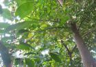 沉香树种植技术视频