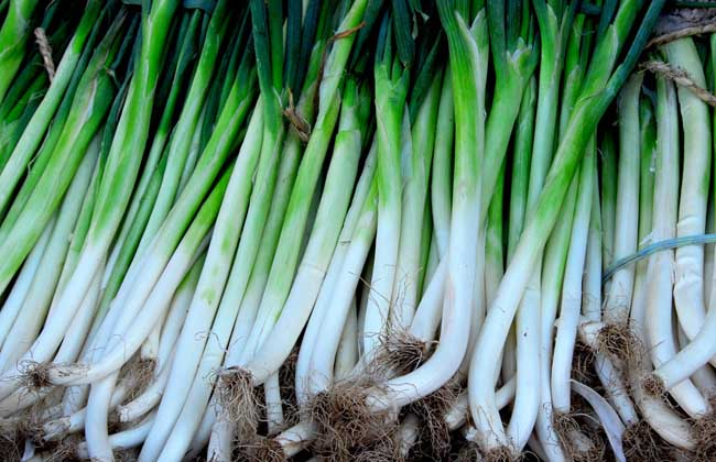 大葱的种植环境