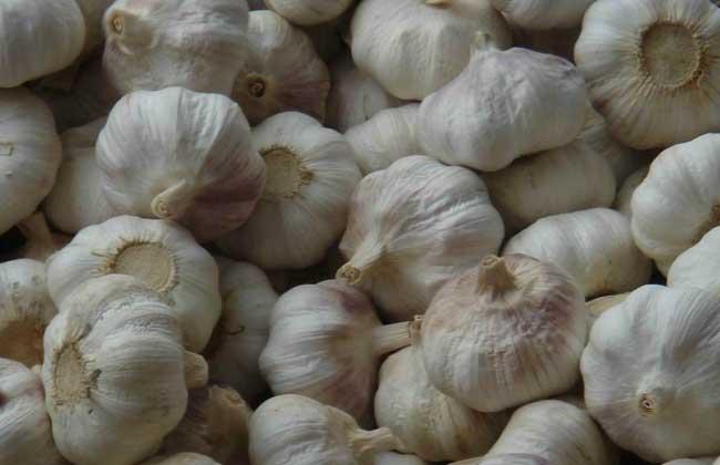 大蒜的产地分布