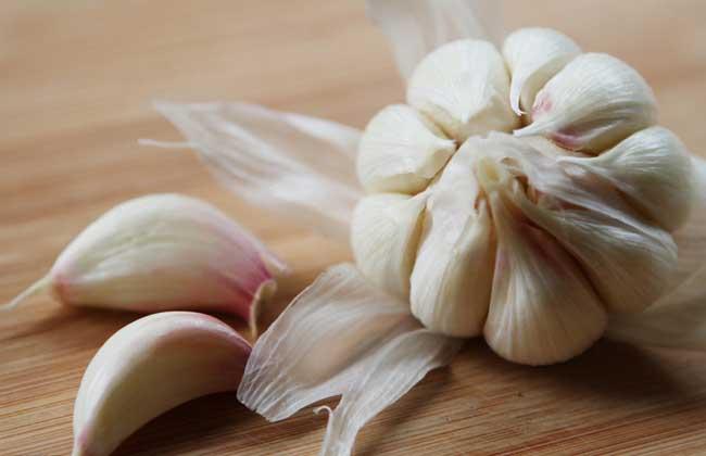大蒜的种植技术