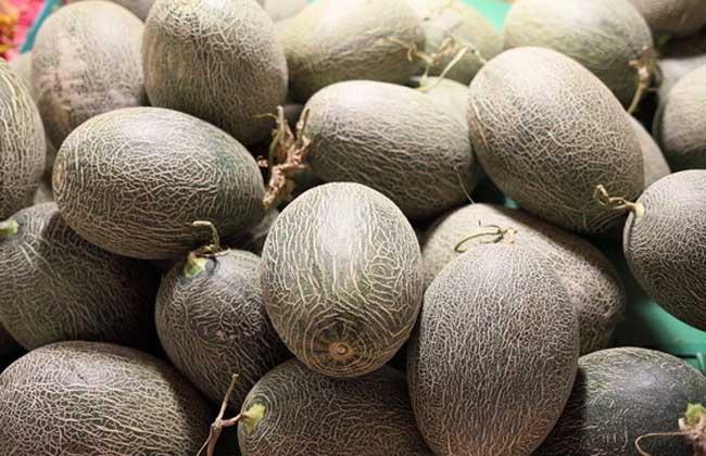 哈密瓜多少钱一斤