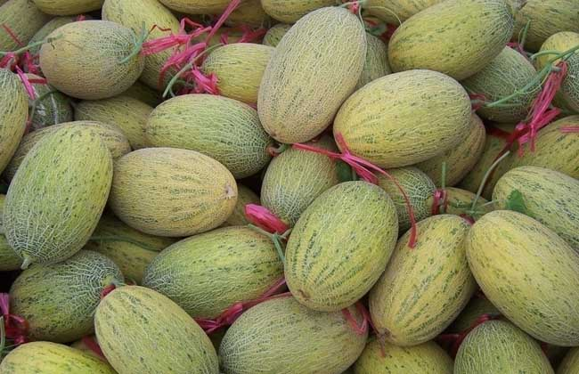哈密瓜的产地分布