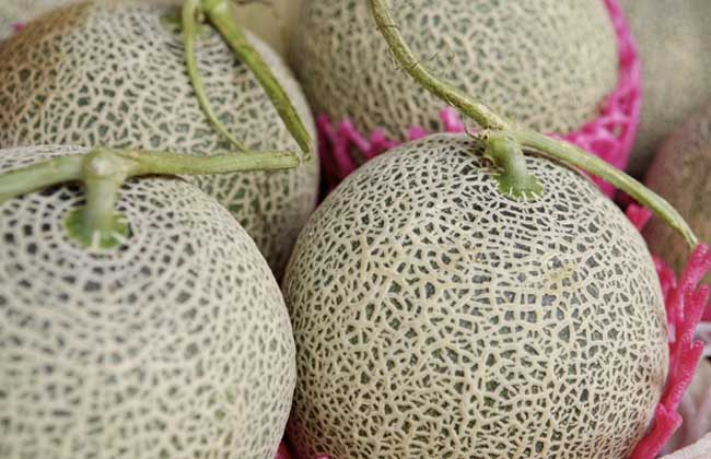 哈密瓜的种类图片
